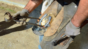 Hot Shoeing for Horses