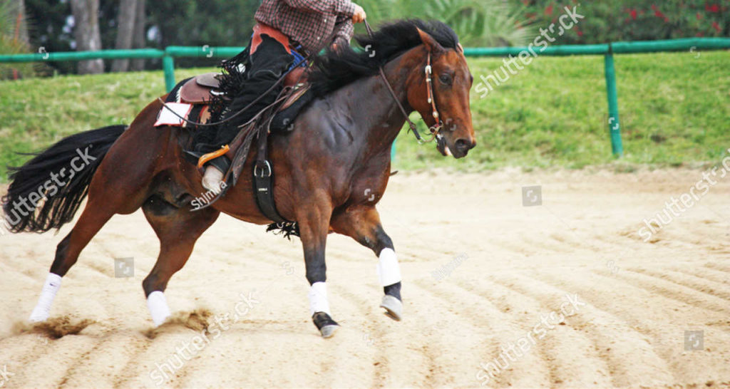 Western Reining Competition