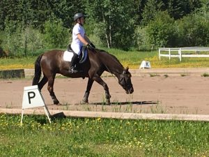 Young Rider riding her first ever Dressage Test
